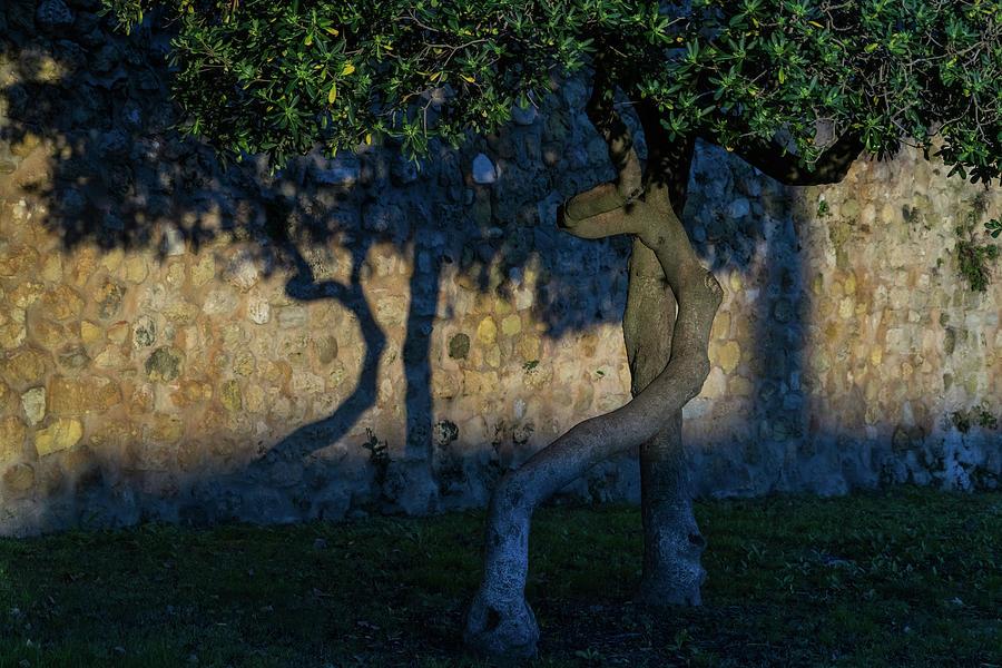 Twisted Early Morning Shadows by Georgia Mizuleva