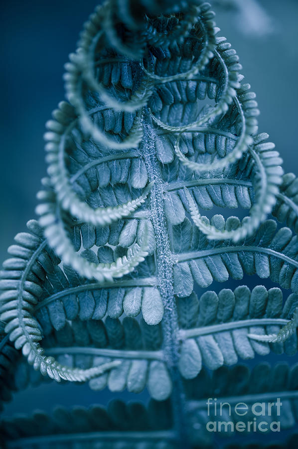 Twisted fern blue leaf macro by Arletta Cwalina