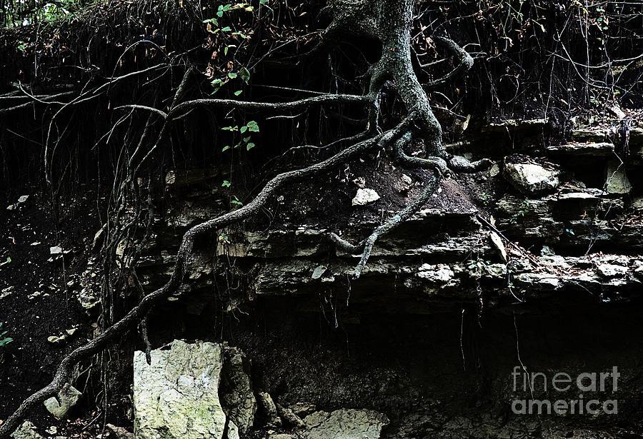 Landscape Photograph - Twisted by Fred Lassmann