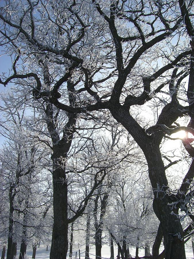 Tree Photograph - Twisted by Jessica Yudis