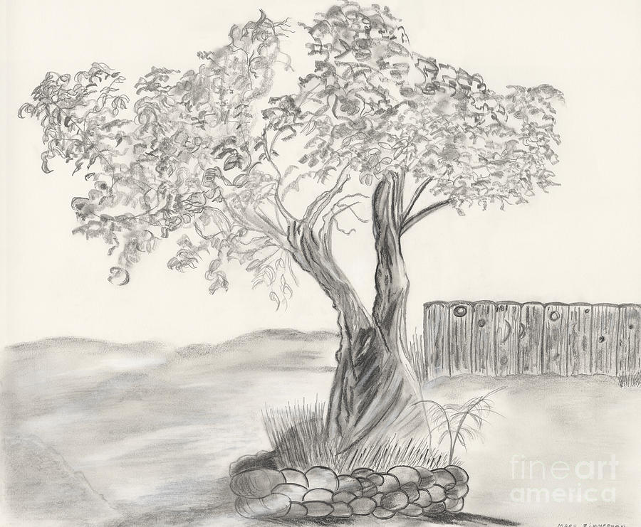 Black And White Drawing - Twisted Trees by Mary Zimmerman