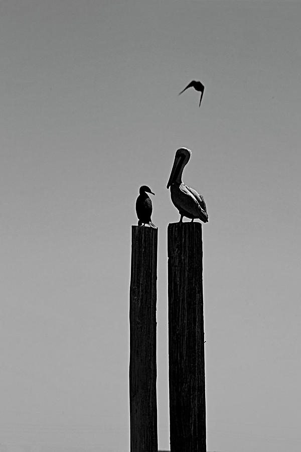 Two Birds And Flying One Photograph by Kim Doyoung