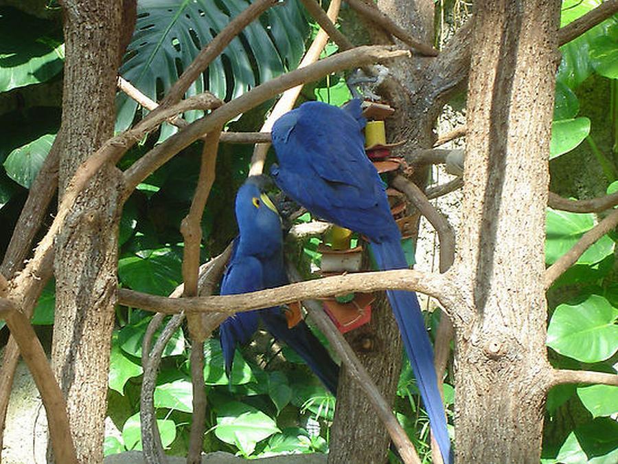 Parrott Photograph - Two Birds by Paula Ferguson