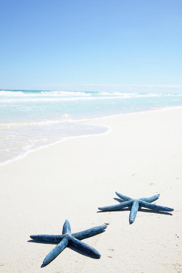 Vertical Photograph - Two Blue Starfish On Tropical Beach by Lulu