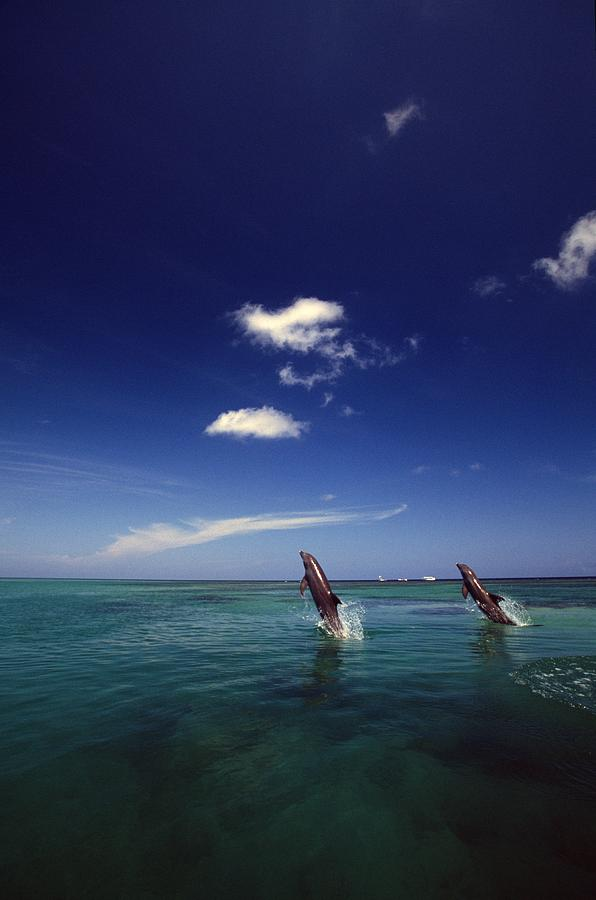 Outdoors Photograph - Two Bottlenose Dolphins Dancing Across by Natural Selection Craig Tuttle