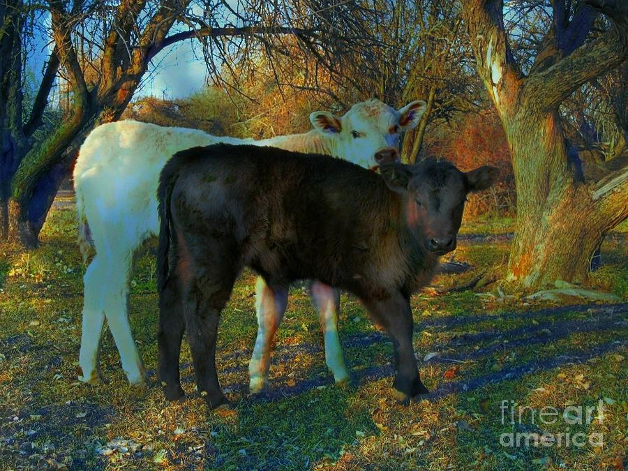Two Calfs Digital Art by Annie Gibbons