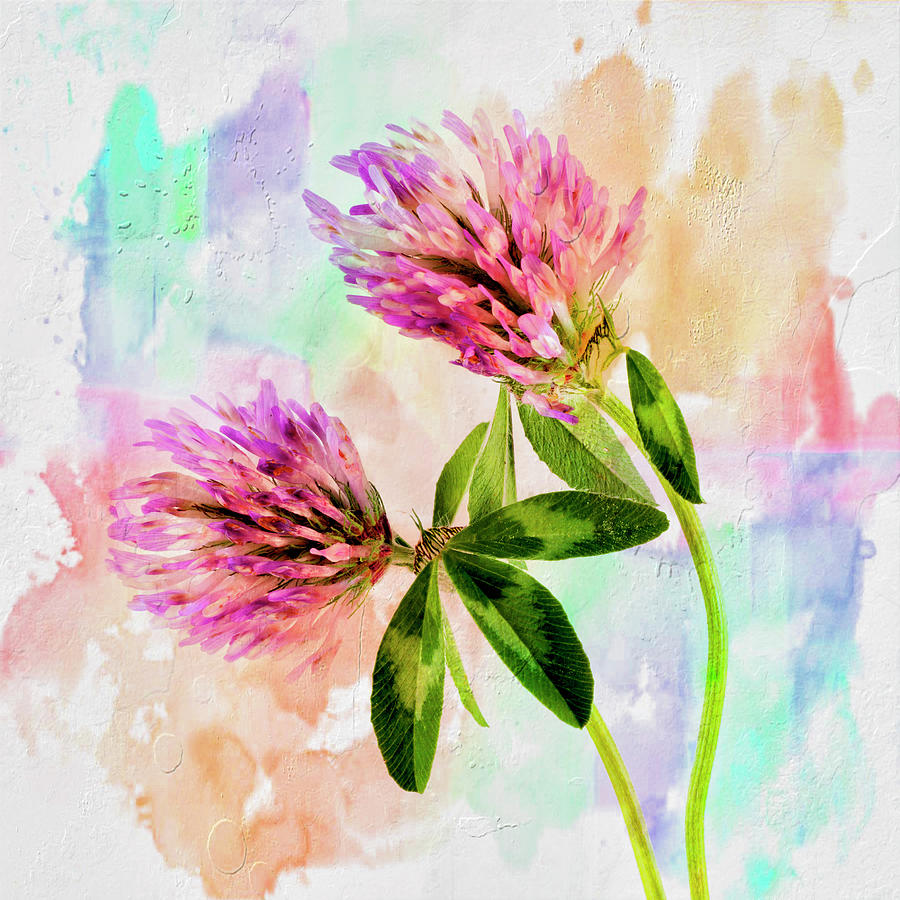 Flower Photograph - Two Clover Flowers With Pastel Shades. by Paul Cullen