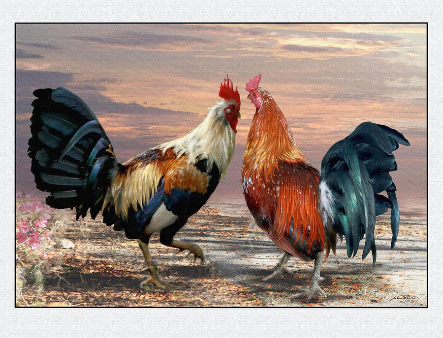 Cock foto