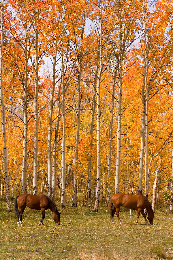 Horse Photograph - Two Colorado High Country Autumn Horses by James BO Insogna
