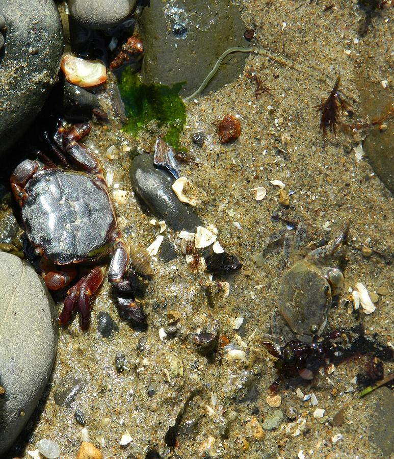 Crabs Photograph - Two Crabs And One Worm by Gallery Of Hope