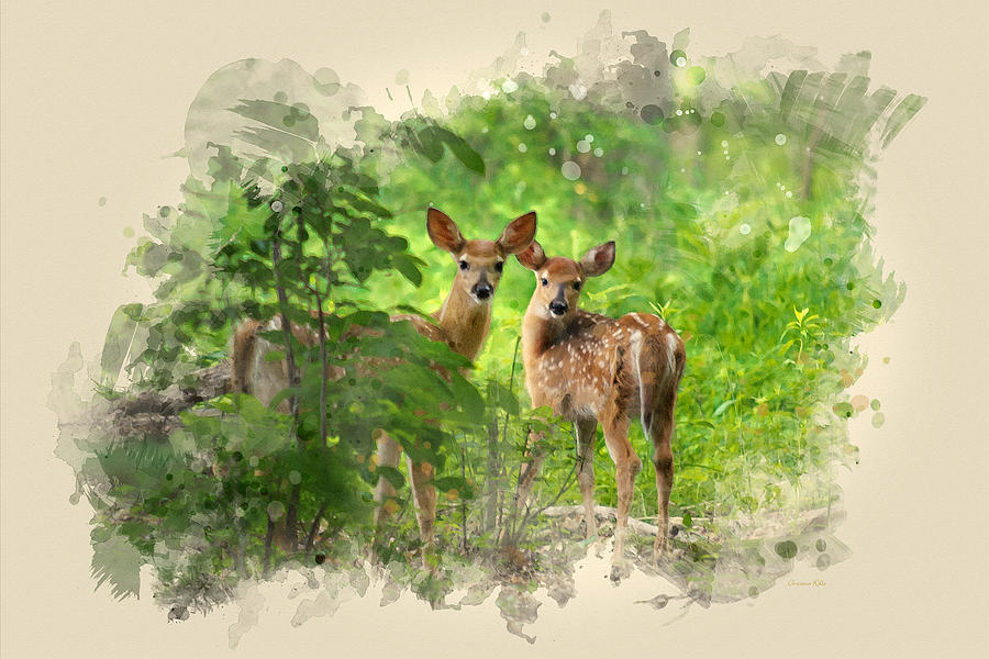 Two Deer Fawns Watercolor Art Mixed Media By Christina Rollo