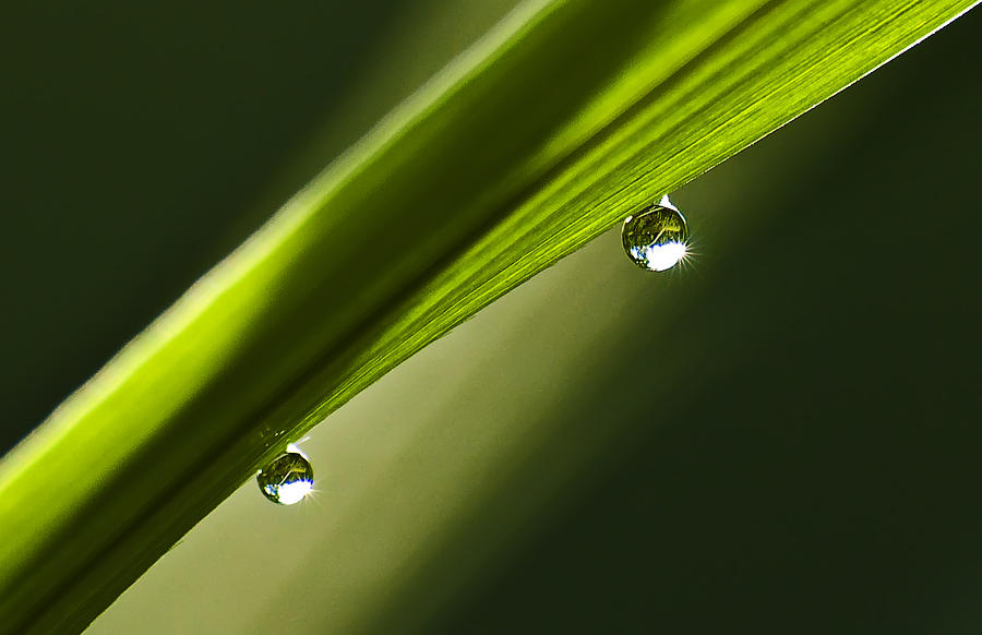 Landscape Photograph - Two Dew Drops On A Blade Of Grass by Michael Whitaker