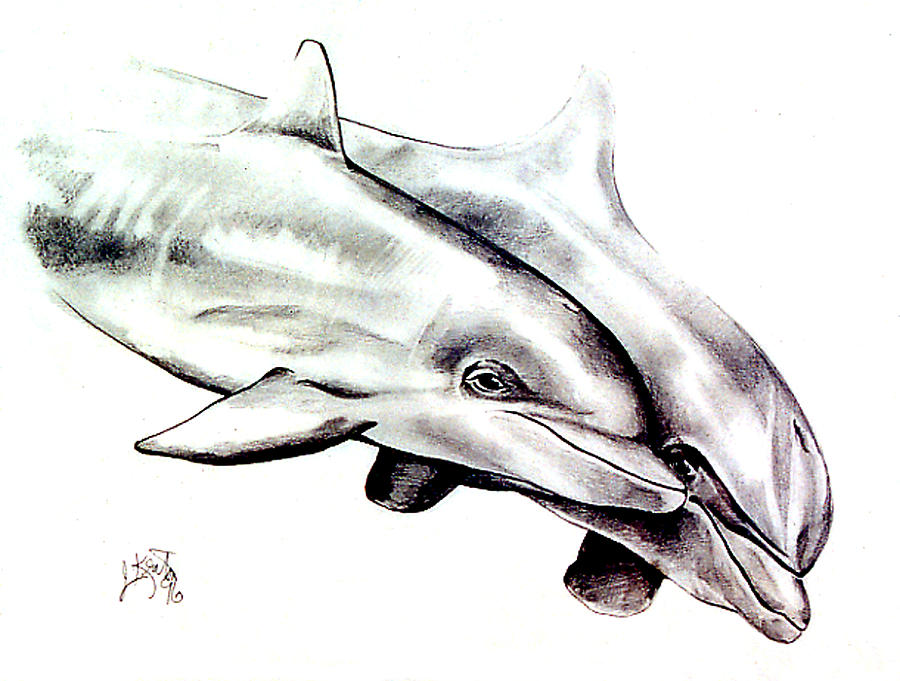 Dolphins Drawing - Two Dolphins by John Keaton