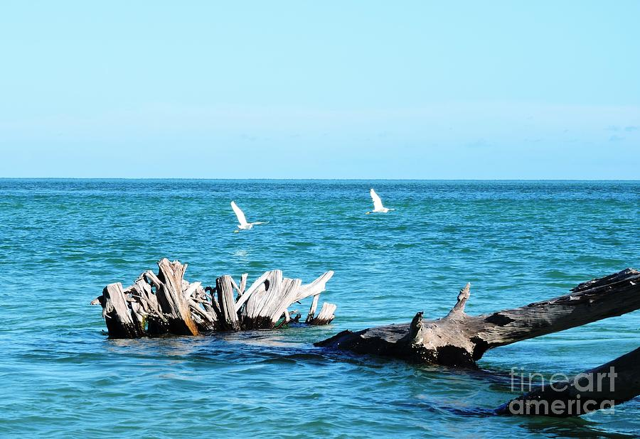 Blue Photograph - Two Egrets by Beth Williams