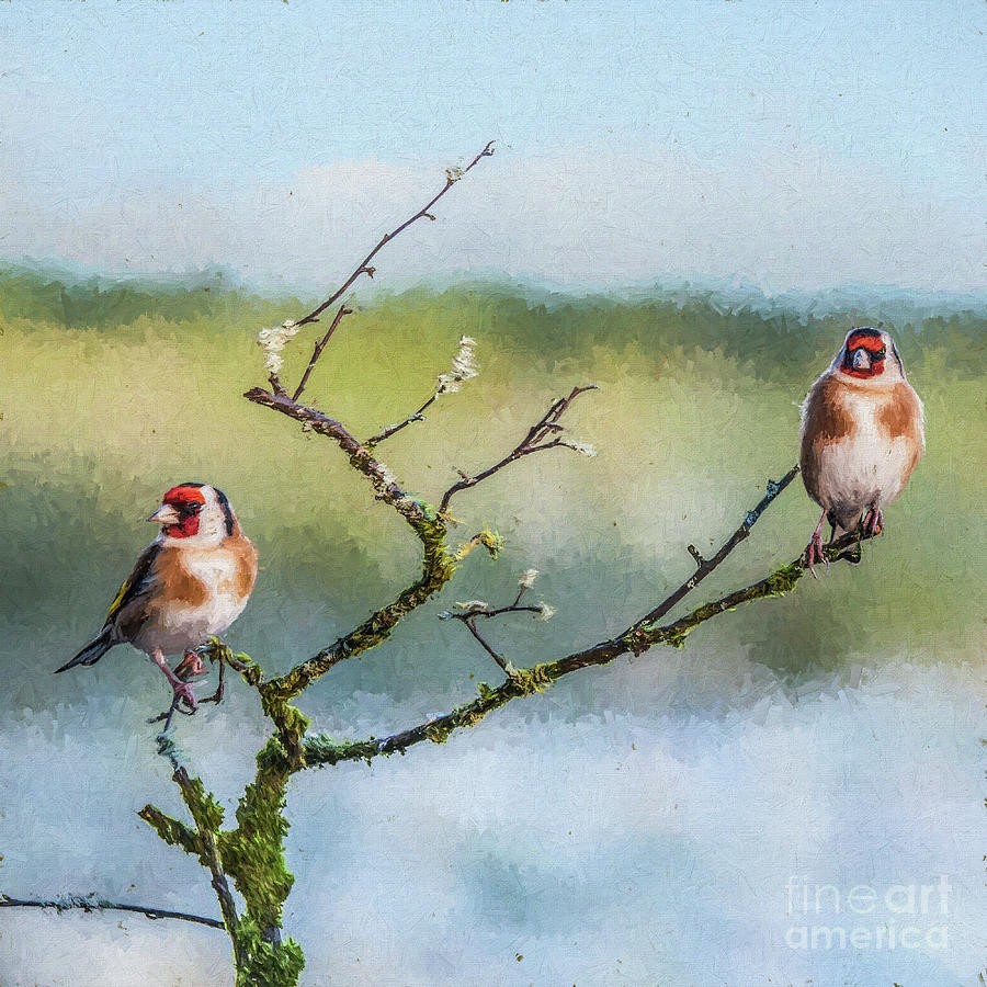 Two European Goldfinches Carduelis carduelis by Liz Leyden