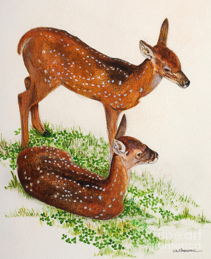 Deer Painting - Two Fawns by Monica Carrell