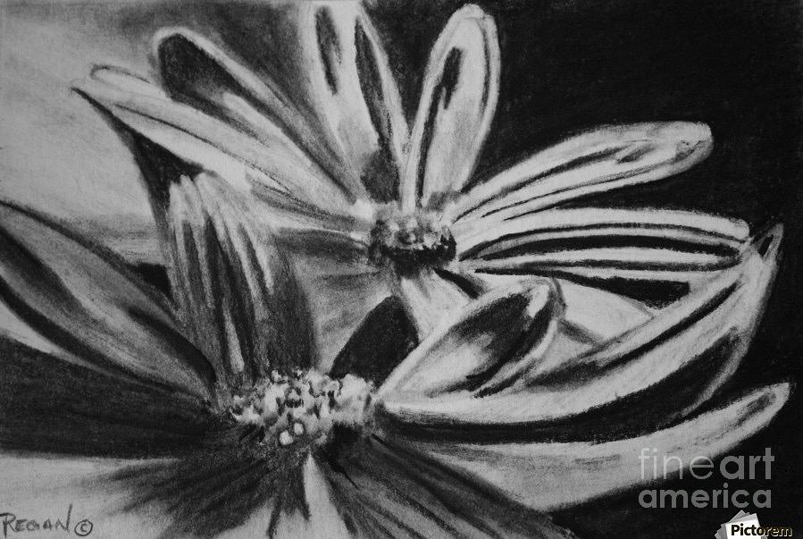 Flowers Drawing - Two Flowers by Regan J Smith