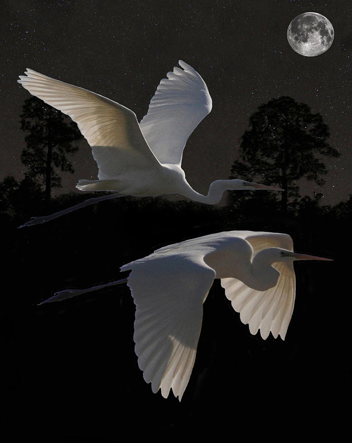 Great Egrets Mixed Media - Two Great Egrets In Flight by Eric Kempson