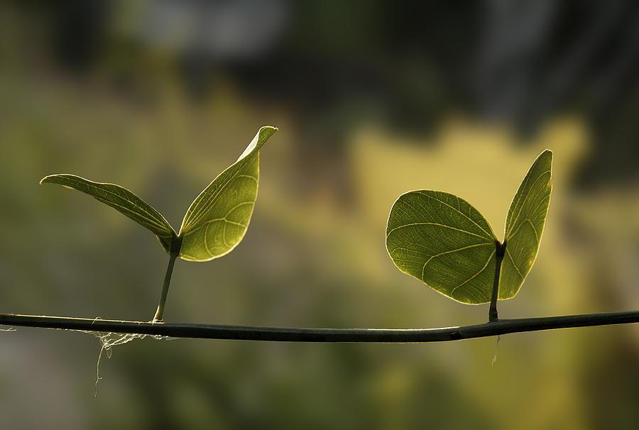 Nature Photograph - Two Green Butterflies by Viktor Savchenko