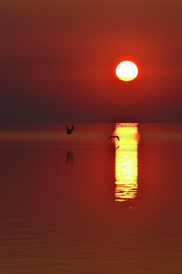 Abstract Photograph - Two Gulls Flying At Sunrise Two  by Lyle Crump