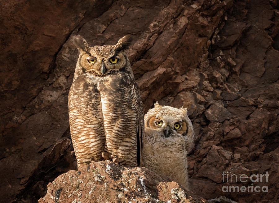 TWO HOOTS by Alice Cahill