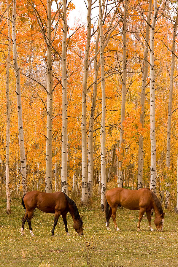 Horse Photograph - Two Horses Grazing In The Autumn Air by James BO Insogna