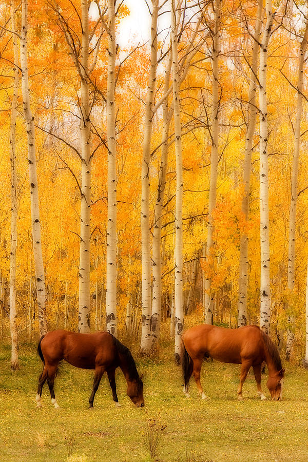 Autumn Photograph - Two Horses In The Autumn Colors by James BO  Insogna