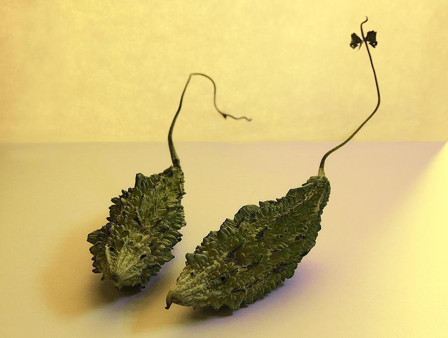 Momordica Charantia Photograph - Two Little Mice by Viktor Savchenko