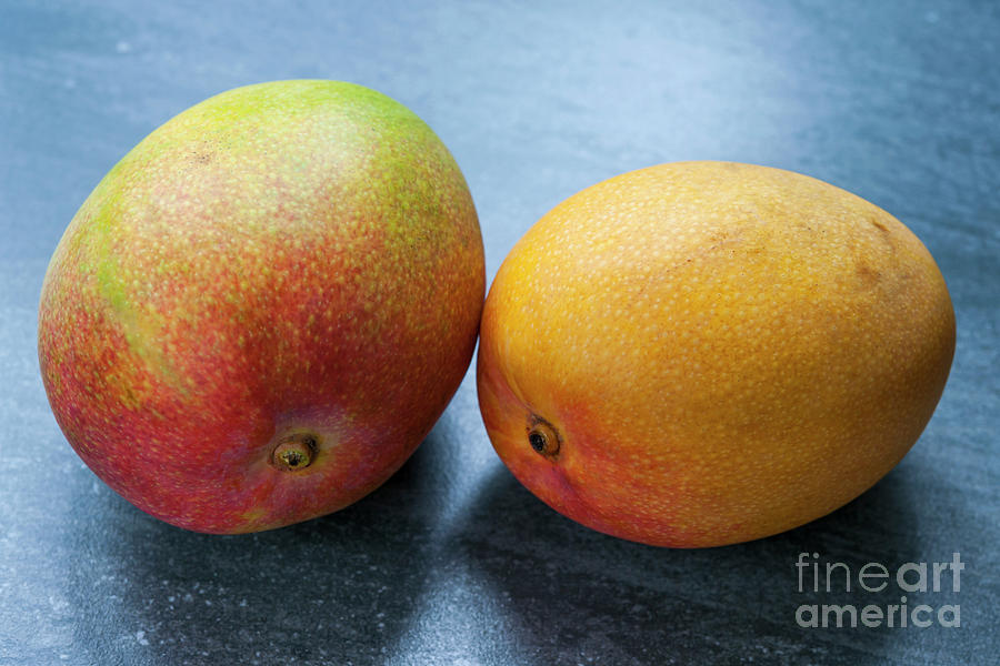 Mangos Photograph - Two Mangos by Elena Elisseeva