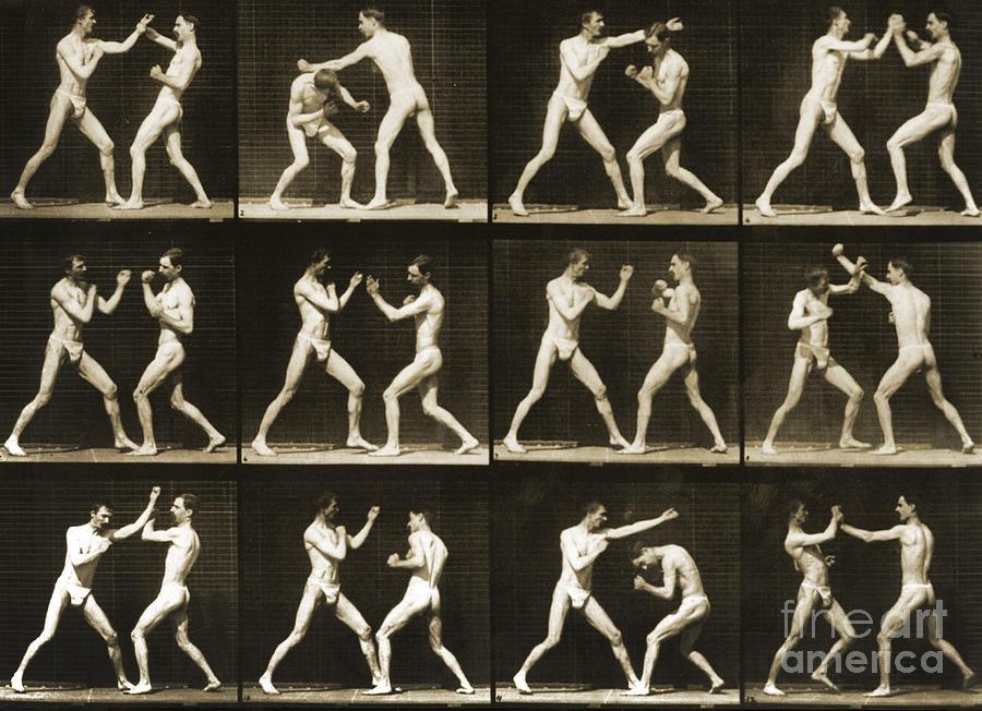 Muybridge Photograph - Two Men Boxing by Eadweard Muybridge