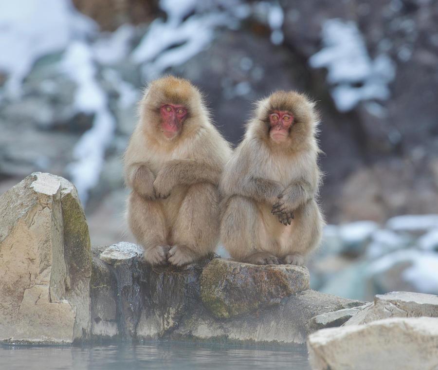 Monkeys Photograph - Two Monkeys by Leigh Lofgren