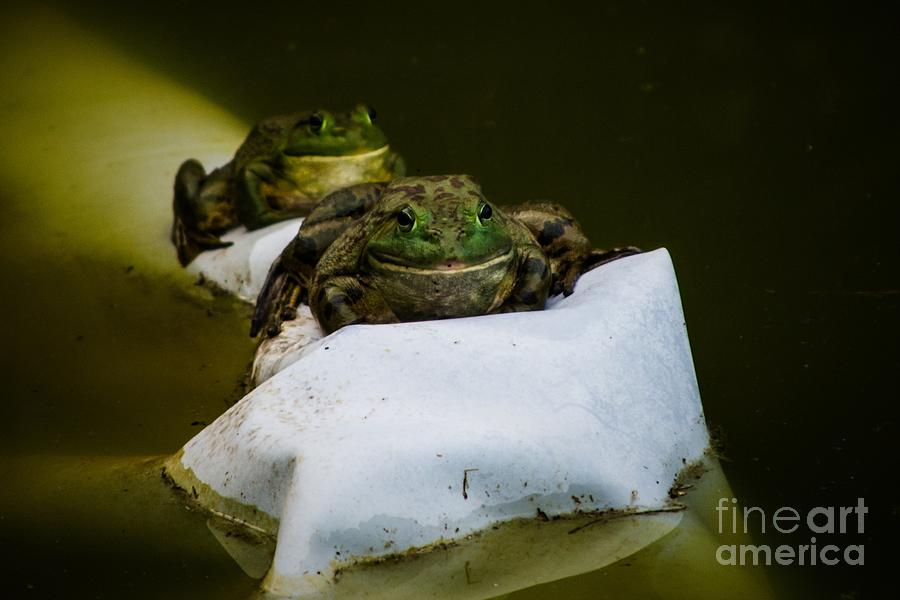 Frogs Photograph - Two Of A Kind by Gaby Swanson