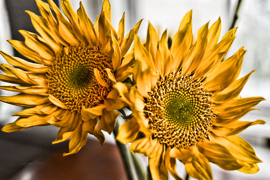 Flower Photograph - Two of a Kind by Sharon Popek