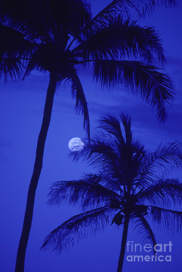 Blue Photograph - Two Palms by Ron Dahlquist - Printscapes