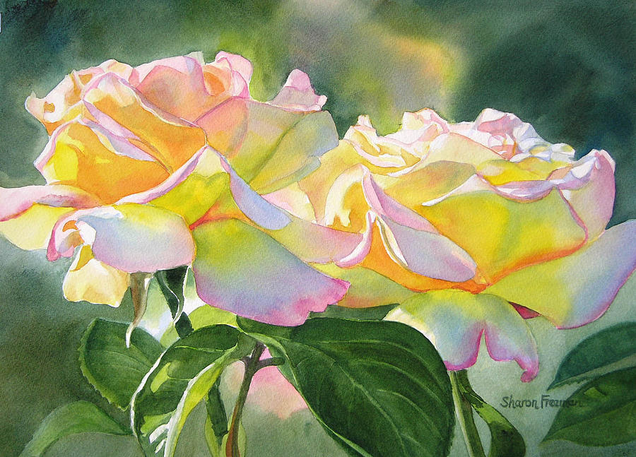 Peace Roses Painting - Two Peace Rose Blossoms by Sharon Freeman