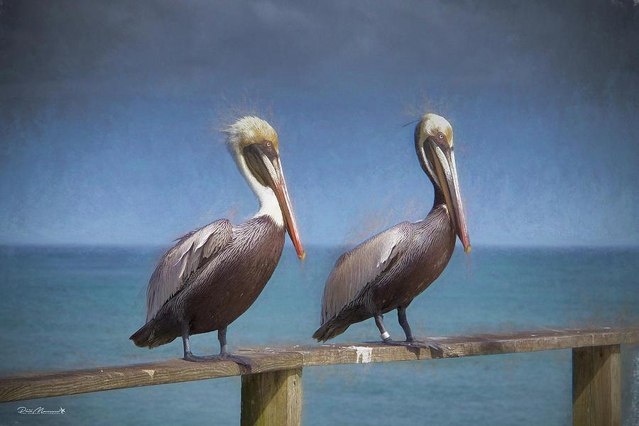 Acrylic Prints Photograph - Twins by Phil Mancuso