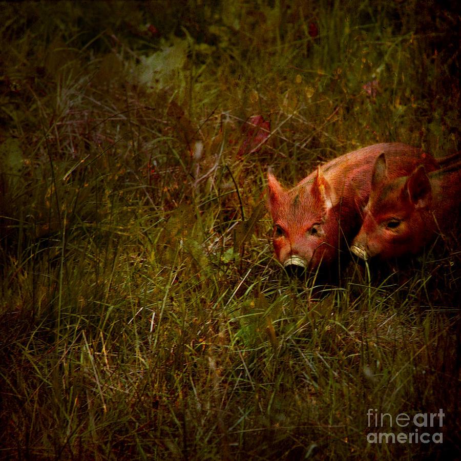 Piglets Photograph - Two Piglets by Angel  Tarantella