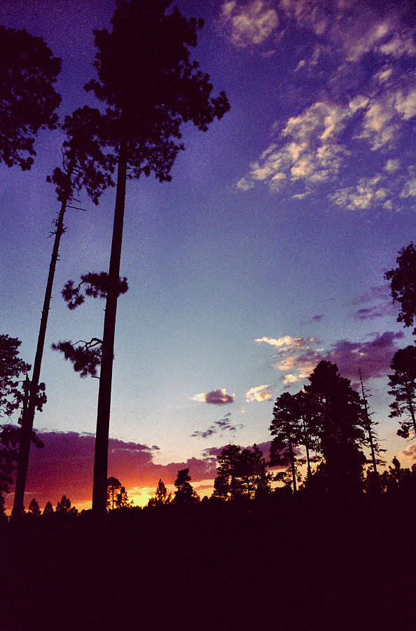 Two Pines Sunset by Randy Oberg