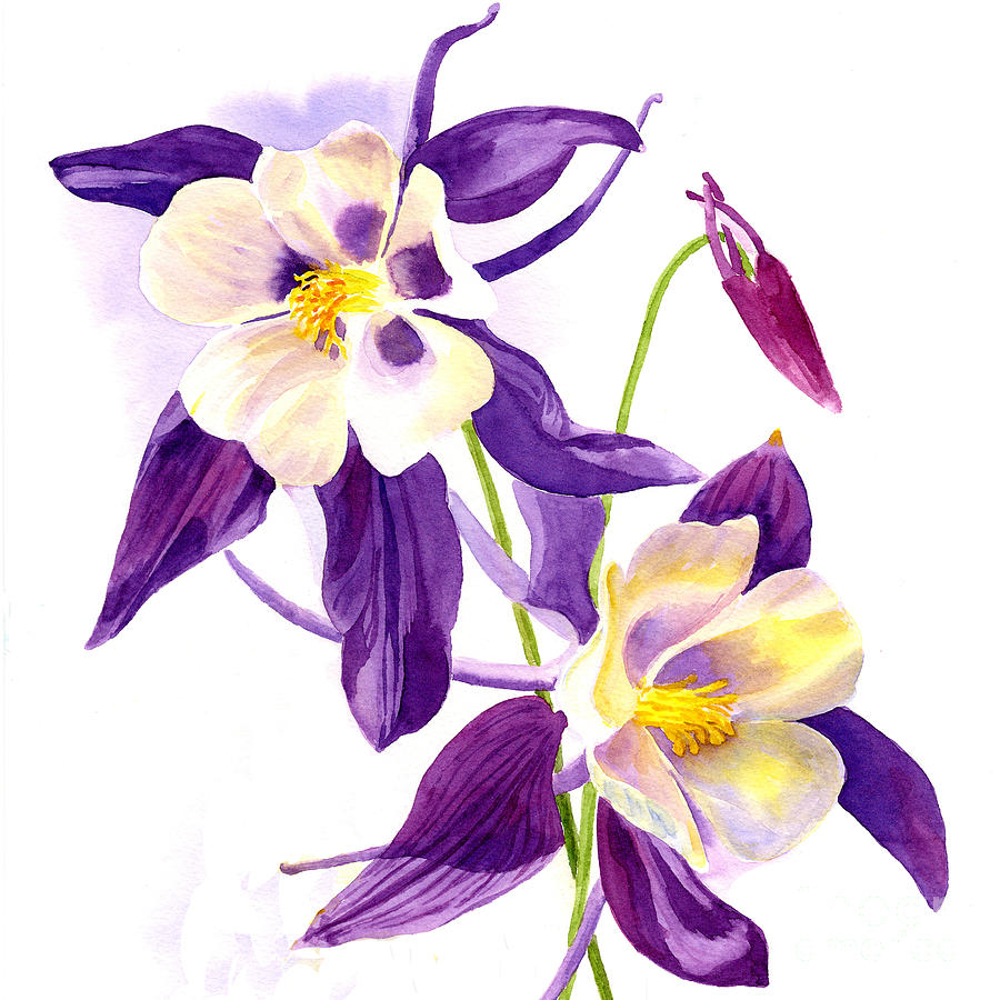 Two Purple Columbine Flower Square Design Painting By Sharon Freeman