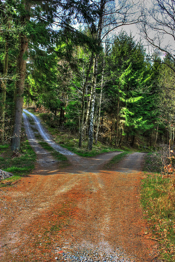 Two Roads Diverged In A Wood Photograph By Richard Stephen