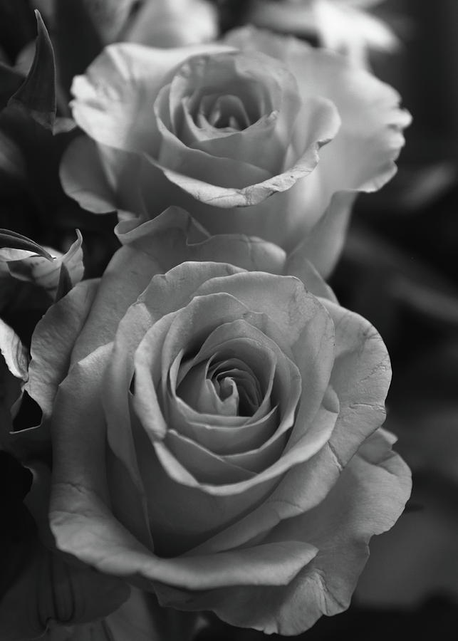Flowers photograph two roses black and white by jeff townsend