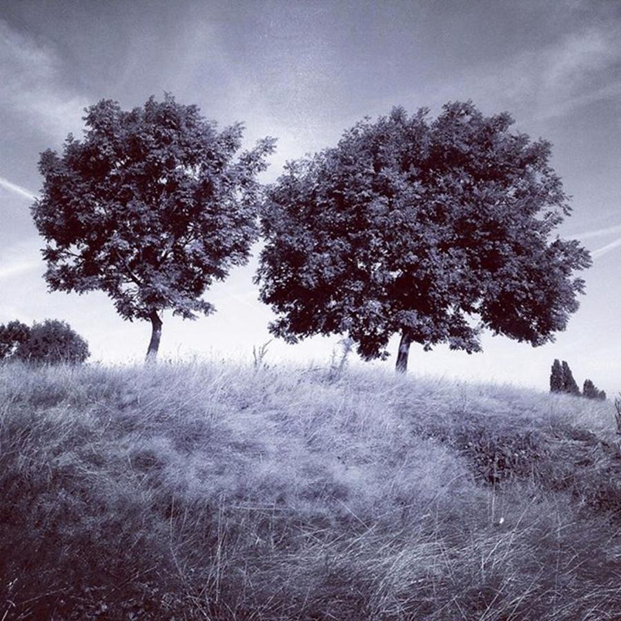 Snapseed Photograph - Two Rowans the Cloddies, Nuneaton by John Edwards