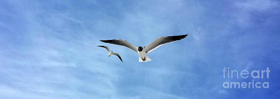 Two Seagulls Against a Blue Sky by Jeanne Forsythe