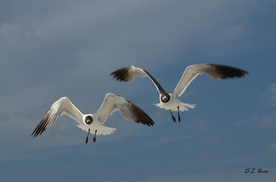 Seagulls Photograph - Two Seagulls by Dennis Stein