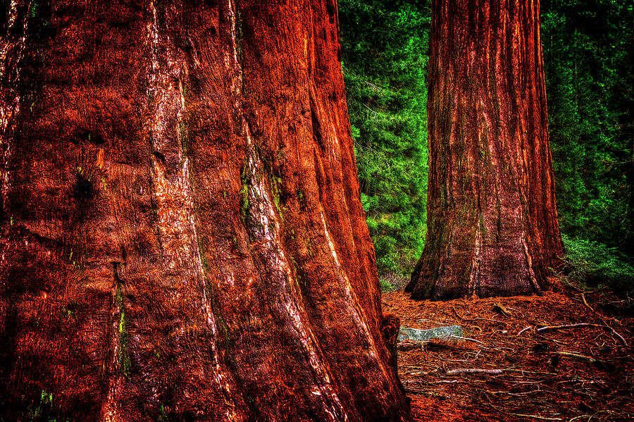 Two Sequoias at Grants Grove by Roger Passman