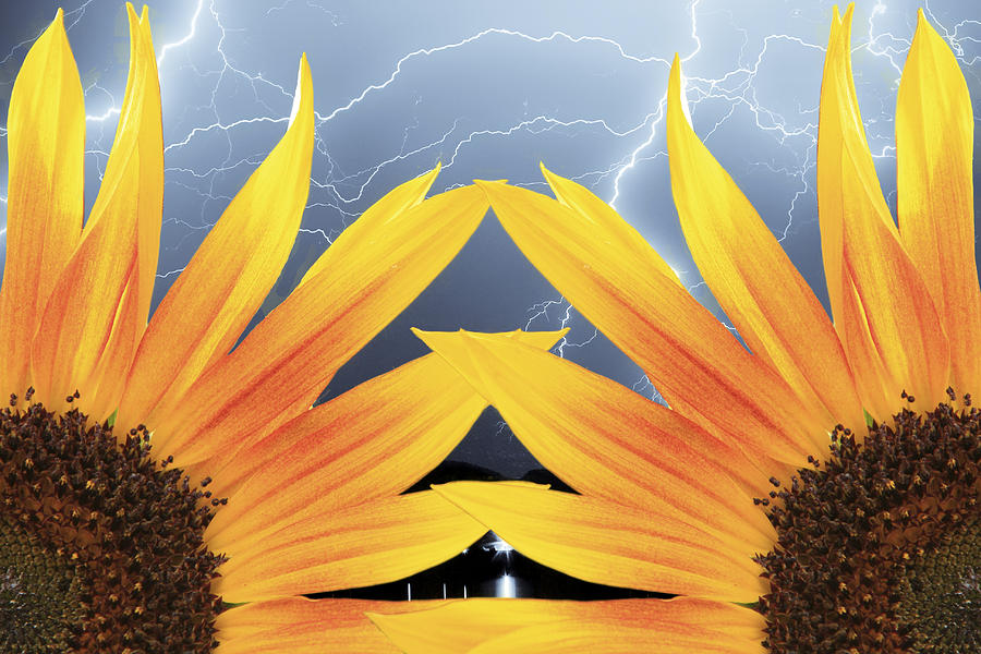 Sunflowers Photograph - Two Sunflower Lightning Storm by James BO  Insogna