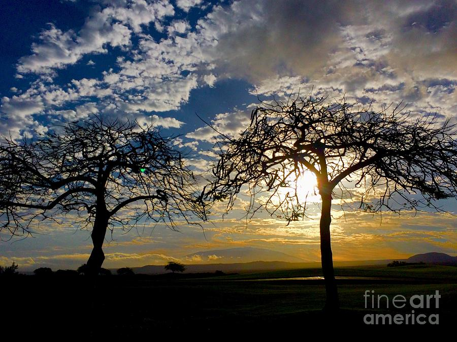 Two Trees by Bette Phelan