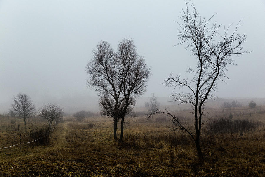 Two Trees In The Fog by Pete Hendley