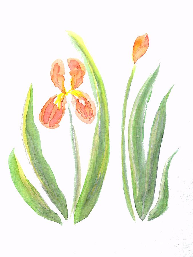 Painting Painting - Two Iris II Watercolor by Delynn Addams