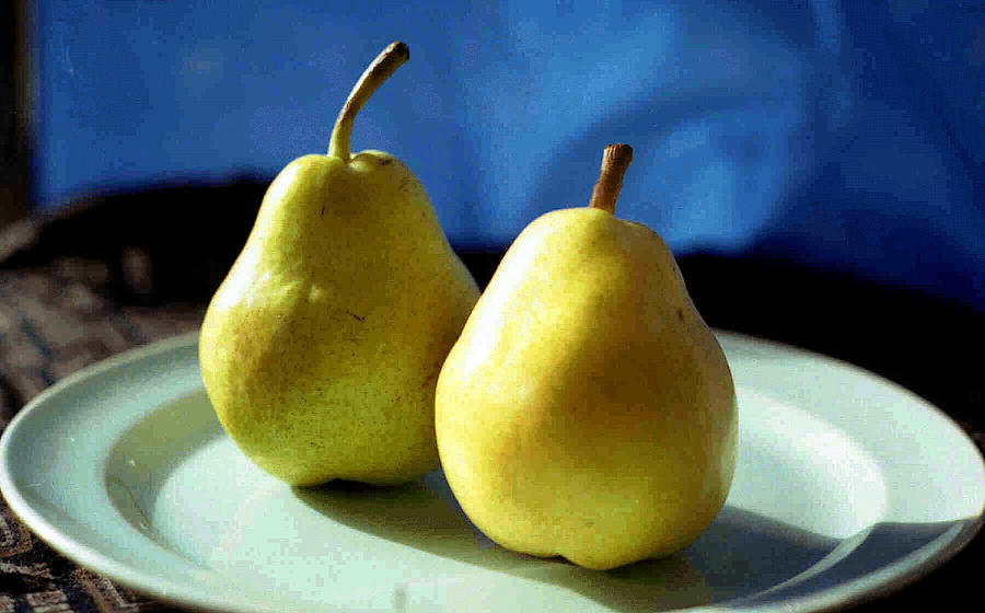 Pear Photograph - Twos Company by Miriam Kalb
